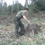 Haiducul Dan Resvanță a chemat Garda Forestieră și numără copacii tăiați abuziv în pădurile din Tiha! Prima victimă: fratele său, zdrobit în bătaie!