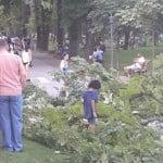 VIDEO: Era să-i ZDROBEASCĂ! Din senin, o creangă imensă s-a rupt în Parcul Municipal în zona foișorului. A căzut la 2 metri de o familie aflată la plimbare, cu copiii!