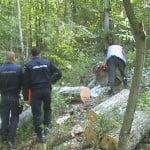 S-a terminat cu jaful pădurilor din Budac? Bărbat de 48 de ani, arestat 30 de zile pentru furt de lemne!