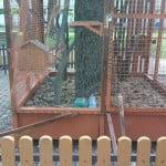 E ȘTIREA zilei: a evadat veverița! Cușca a fost VANDALIZATĂ! Credeți că primarul Crețu va re-popula pușcăria pentru veverițe?