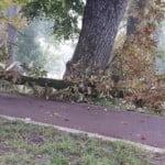 Crețu: Vegetația din municipiul Bistrița s-a comportat foarte bine în timpul furtunii! Specialiști care să inventarieze arborii nu avem!