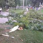 Un bărbat de 57 de ani a decedat în Parcul Municipal, după ce un copac a căzut peste el