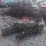 Cum explică Primăria Bistrița tăierile de arbori de pe strada Alba Iulia?!