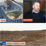 VIDEO: Renaște vinul de Lechința! Jurnaliștii de la PRO TV au mers pe teren să vadă cum stă treaba la crama din zonă!