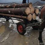 FOTO: 5.000 de lei amendă pentru transport ilegal de material lemnos. În plus, marfa a fost confiscă