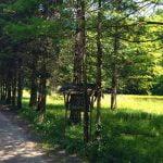 În Complexul Wonderland ar putea fi amenajat un parc dendrologic. Care ar putea fi sursa de finanțare?