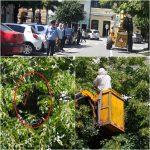 VIDEO: Mobilizare de forță la Primăria Bistrița! Un roi de albine s-a instalat într-un copac din Piața Centrală!