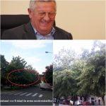VIDEO: Se taie TEII! Vezi un filmuleț scurt cu toți copacii care vor fi executați cu DRUJBA, în Piața Centrală!