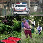 Polițiștii i-au confiscat fructele, estimate la 1.500 de euro! Un șofer din Bistrița a fost prins FĂRĂ acte, cu 800 de kg de fructe de pădure!