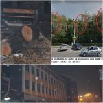 """Deranjați de ciorile care făceau mizerie, au găsit soluția """"românească"""": au tăiat copacii din jurul Consiliului Județean, intrarea de pe 1 Decembrie !"""
